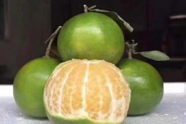 皇帝柑8斤