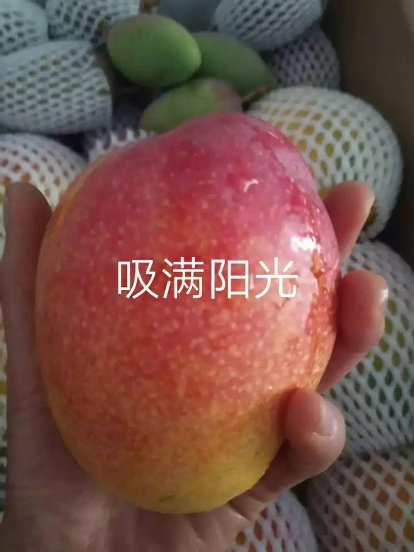 丽江圣心芒果23.jpg