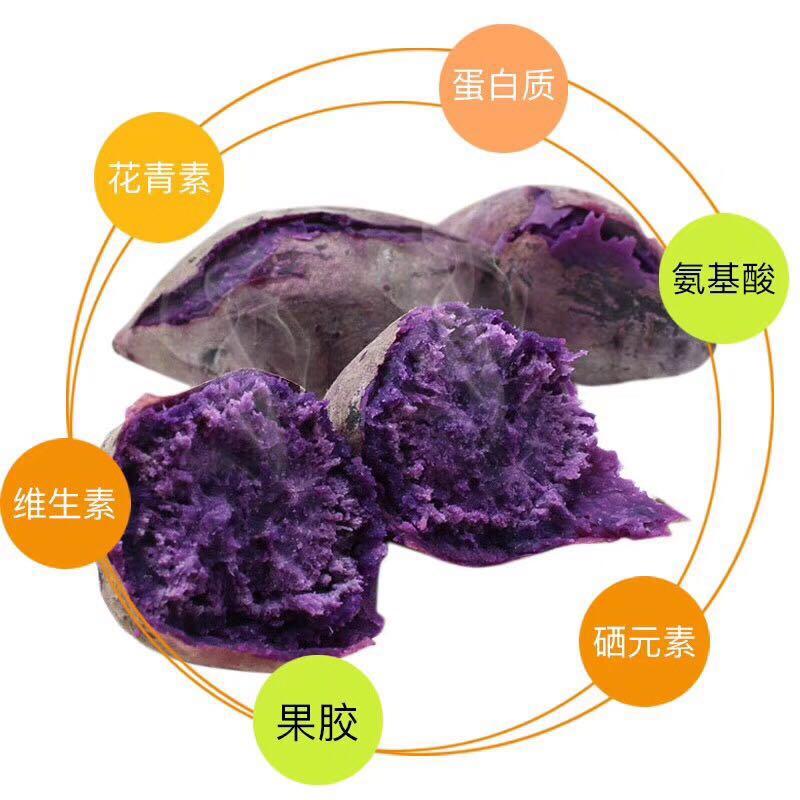 越南紫薯44.jpg