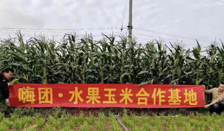 水果玉米8斤41.jpg