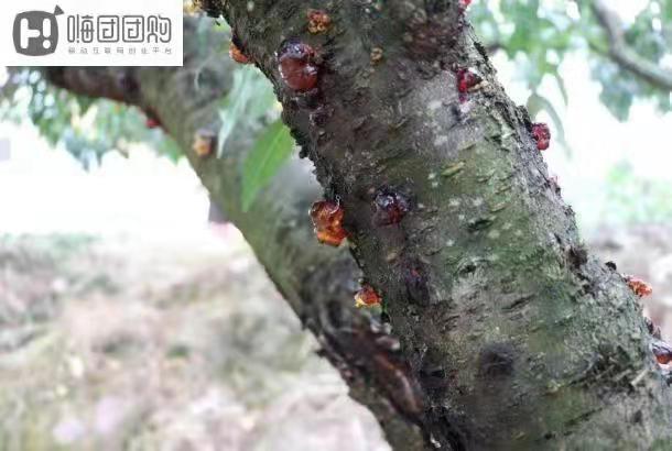 嗨团水蜜桃桃胶2斤14.jpg