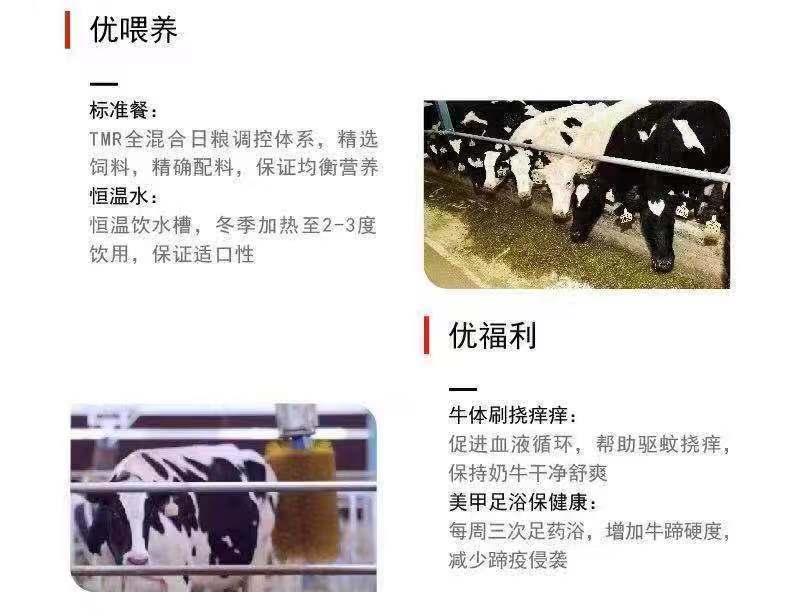 嗨团君乐宝纯小白纯牛奶9.jpg