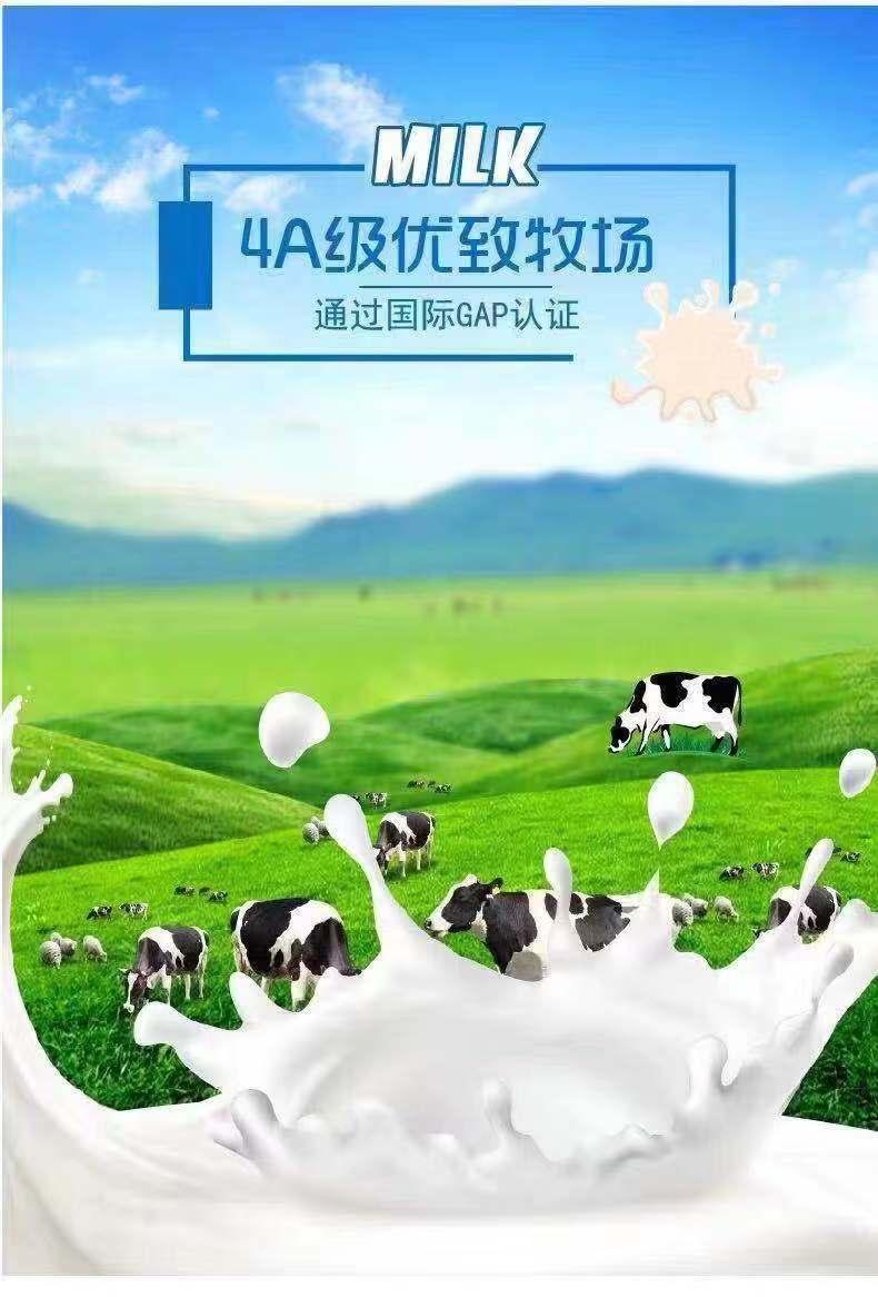 嗨团君乐宝纯小白纯牛奶12.jpg